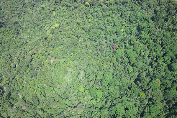 Rainforest Canopy from gyrocopter